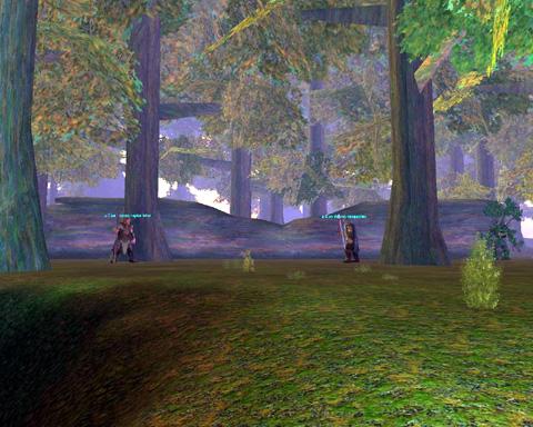 Eldder forestのジャイアント
