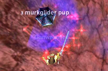 a Murkrider pup