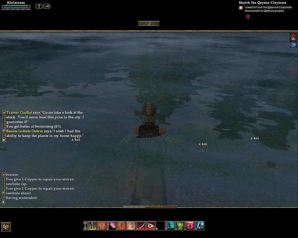 鯉が泳いでます